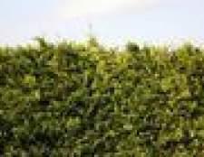 Plantas verdes para bloquear vistas
