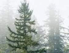 As causas de uma árvore verde perder agulhas