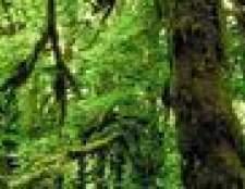 As características da floresta tropical