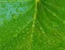 A produção de glicose em plantas