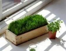 O reinos são capazes de fotossíntese?