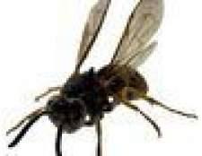 Variedades de vespas