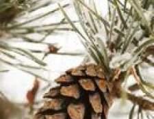 Tipos e espécies de árvores de rolamento de cone