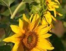 Tipos de flores em torno de cercas