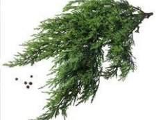 Tipos de arbustos de zimbro