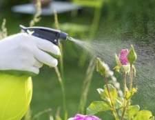 Usando ritmo insecticida