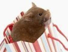 Que animais geralmente comem hamsters em estado selvagem?
