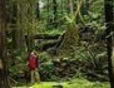 Quais são alguns dos fatores abióticos em uma floresta tropical temperada?