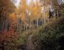 Quais são as formas de relevo da floresta decídua temperada?