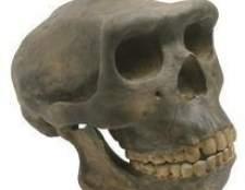 Quais são os dois tipos de antropologia?