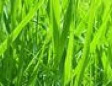O que fazer para fertilizantes grama?