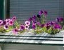 Que flores são os melhores para uma caixa de flor?