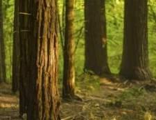 O que é redwood utilizado?