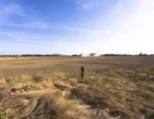 Qual é a diferença entre o inverno azevém e azevém verão?