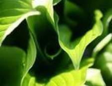 Que tipo de reação é fotossíntese?