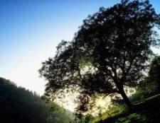 O que ocorre durante as reações escuras da fotossíntese?
