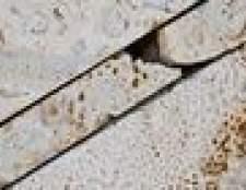 O que as rochas são fósseis comumente encontrados em?
