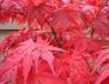 Quando plantar árvores outubro glória de bordo?