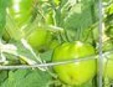 Quando plantar tomates no texas