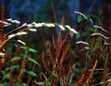 Ao pulverizar herbicida