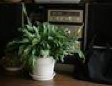 Que planta da casa é melhor para a limpeza do ar?