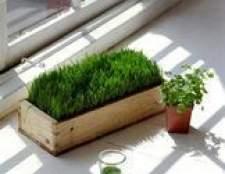 Por que os cloroplastos é tão importante?