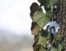 Videiras silvestres que crescem árvores